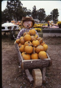 9015-036-001 Pumpkin Art Folder 4 portrait001