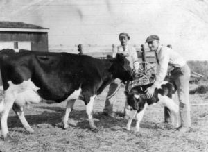 Men with a Cow and a Calf